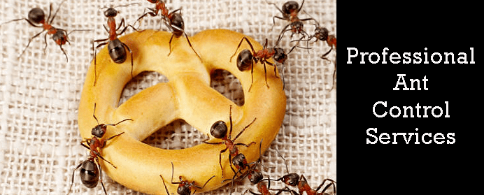 Professional Ant Control Services
