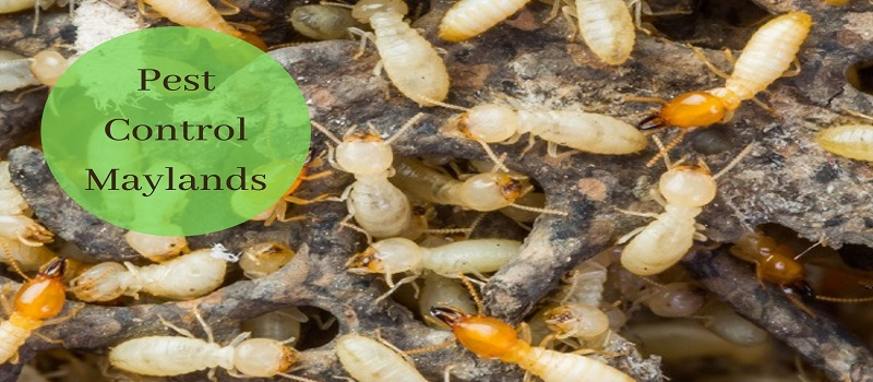 Trusted Pest Control Company Maylands